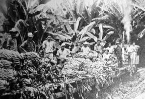 Dans une plantation colombienne de l'United Fruit