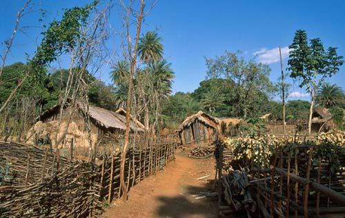 Village adivasi