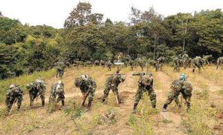 Les militaires éradique la coca dans la région d'Apolo