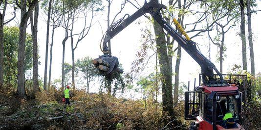 operation-de-deforestation-sur-le-site.jpg