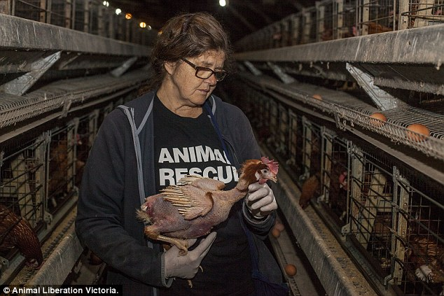 Patty Mark à l'intérieur de la ferme de poulets.