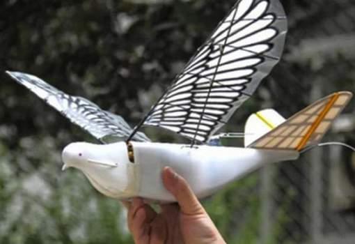 Le pigeon-robot